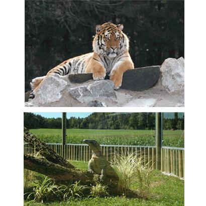 Changement de tarifs au Zoo et au Tropiquarium de Servion